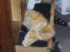 01-05-19-jambo-schublade2